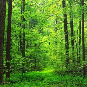 周三朗讀夜:<BR/>走路。在山野在部落。一個人